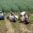 Vietnam-Central-Highlands-Farmers-2