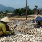 Tapioca Farmers - Vietnam, Central Highlands