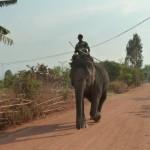 Elephant on the road - Vietnam, Central Highlands